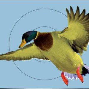 Pregame 12x18 inch Duck Pregame 12 x 18 Inch Duck-ampumataulu, reagoiva