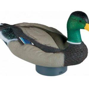 Lucky Quiver Duck HD Lucky Quiver Duck HD