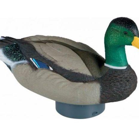Lucky Quiver Duck HD